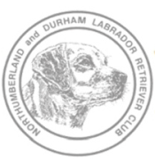 Northumberland and Durham Labrador Retriever Club